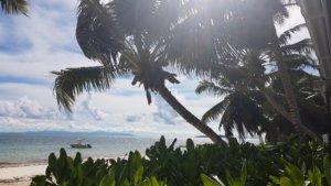 Seychellen Palme