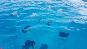Fische Seychellen