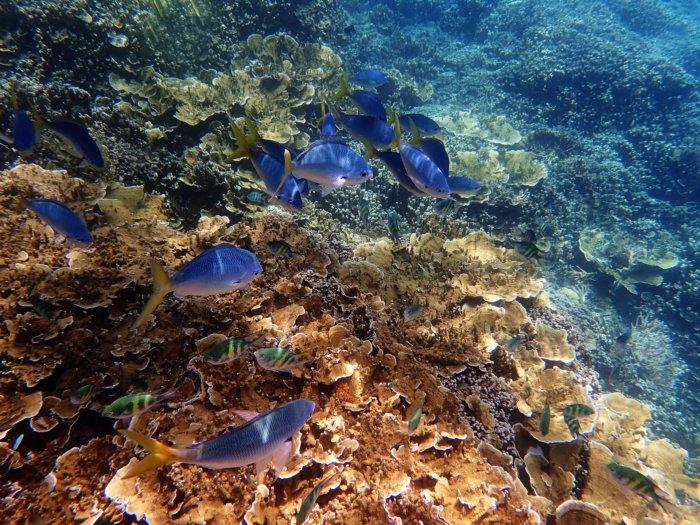 Great Barrier Reef Urlaub