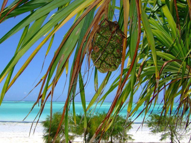 Tansania Sansibar Urlaub