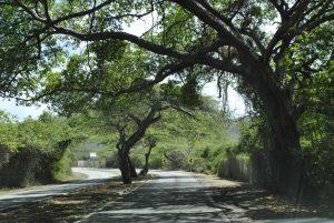 curacao cristoffel park