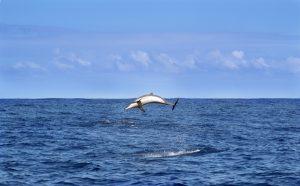 Delfin La Réunion