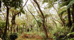La Reunion primary-forest