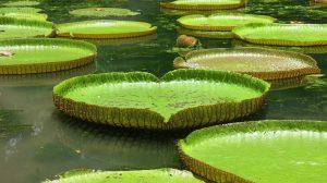 Mauritius Botanischer Garten