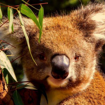 Familie Nordaustralien Urlaub