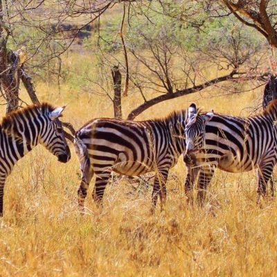 Tansania Urlaub Tierwelt